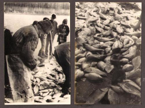 Nagy Sandor halasz 1960 as evek
