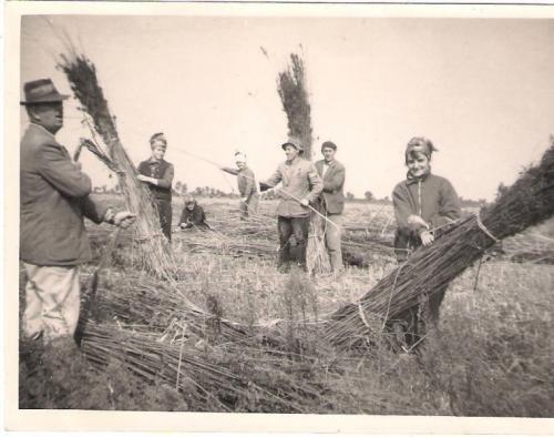 Régi képek - Mezőgazdaság